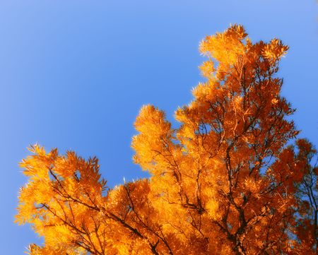 The forest in autumn photo