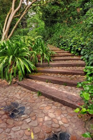 My African garden - lush green, stone footpath, and summer photo