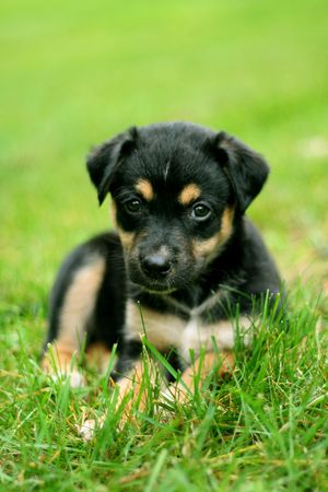puppy in grass Stock Photo - 4309920