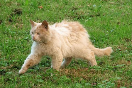 smudgy: Homeless cat Stock Photo