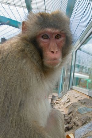 A monkey in a zoo looking sadly Stock Photo - 3435126