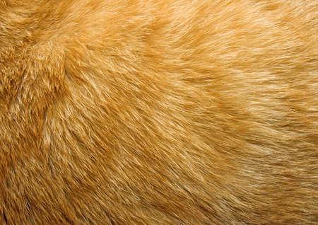 textura pelo: Close-up de piel de gato o de jengibre para la textura de fondo