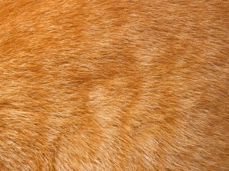 Close-up of ginger cat fur for texture or background photo