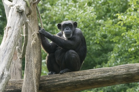 Monkey sitting on a tree in a zoo Stock Photo - 11595805