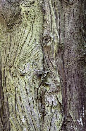 bumpy: Texture of old grey bumpy tree bark Stock Photo
