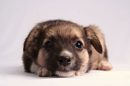 Dog, the puppy,
