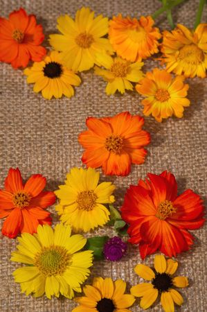 brightest: Fiori di prati estivi sono le pitture pi� brillanti.  Archivio Fotografico
