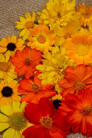 brightest: Fiori d'estate i prati sono pi� brillanti vernici.