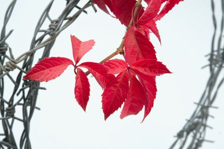 brightest: L'autunno ci mostra i colori pi� brillanti