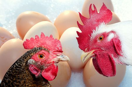 fertility emblem: Chickens and eggs