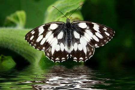 Reflection in water of the beautiful butterfly. photo