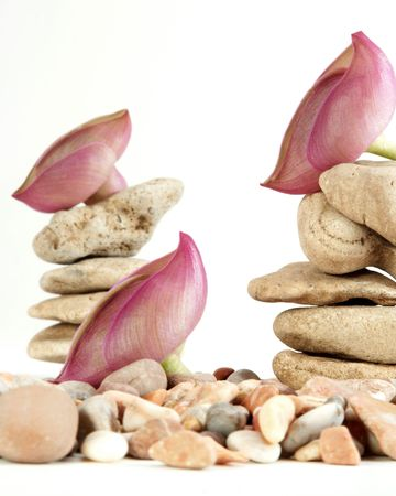 Decorating of wild stones by violet colors photo