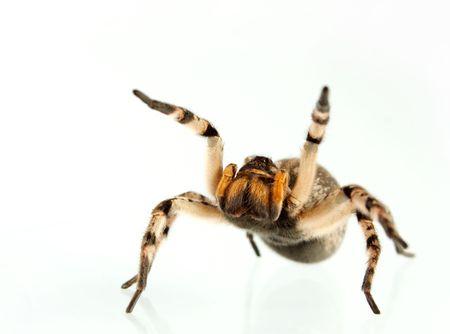 preocupacion: No todas las personas de igual inter�s para las ara�as