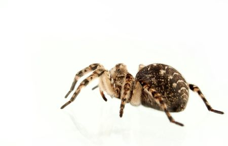 Not all people equally well concern to spiders photo