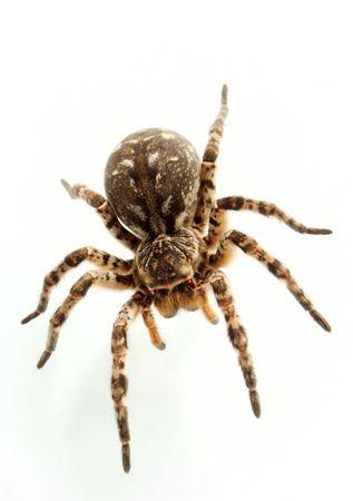 preocupacion: No todas las personas de igual preocupaci�n a las ara�as