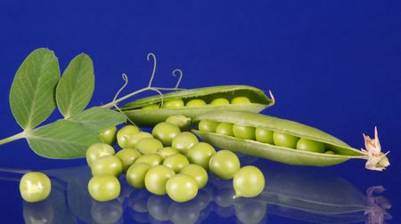 The period of development, flowering and maturing of peas is finished, it is possible to reap a crop! photo