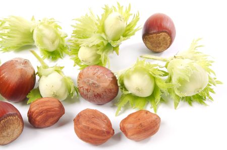 Group of fruits of a nut tree on a white background. photo