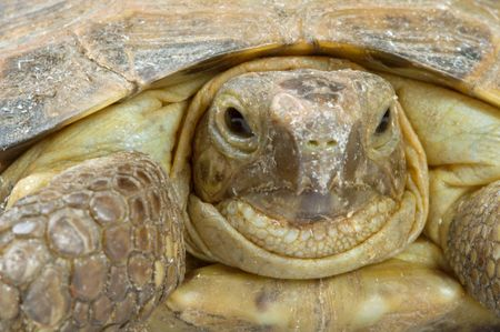 laziness: Young overland turtle