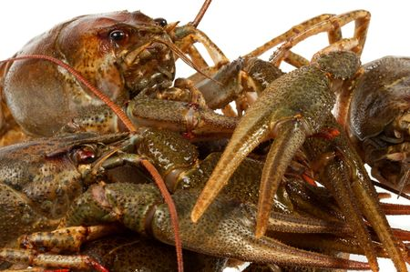 River crayfish on a white background. It is very tasty and dietary food. photo