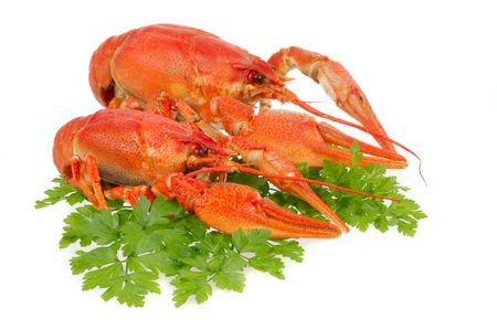 River crayfish on a white background. It is very tasty and dietary food. Stock Photo - 4579835