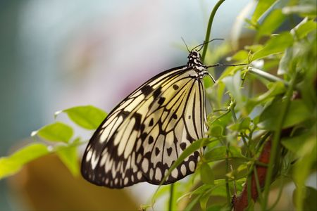 The beautiful butterfly is considered a symbol of love. photo