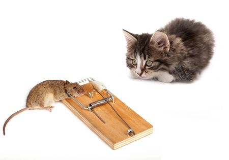 mouse trap: Kitten and the dead mouse on a white background