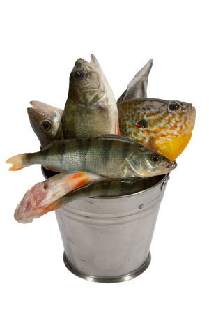 Good fishing always brings a lot of fish Stock Photo - 8257066