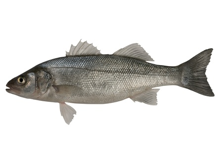 seabass: Seabass, Dicentrarchus labrax. Isolated on the white background  Stock Photo