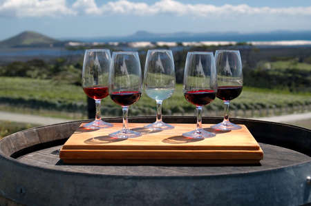 Wine Tasting Glasses Stock Photo - 558704