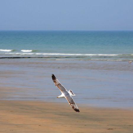The white seagull flies over a beach photo