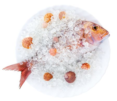 Whole Dorado lays in ice on a white plate with cockleshells on a white background photo