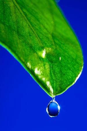 Green leaf close up on a dark blue background  photo