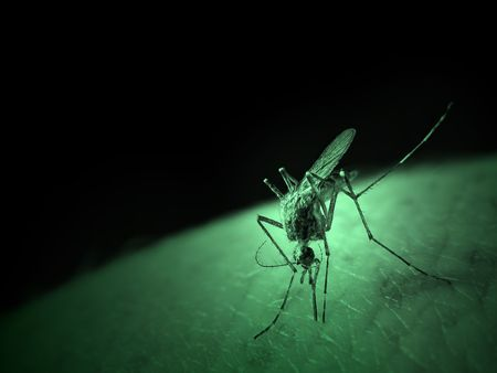 A Mosquito sucking blood. Suposed to look like infrared captured image
