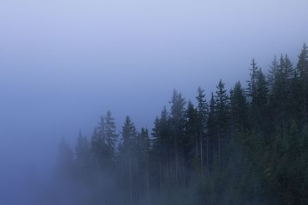 A forest on a mountain covered in fog. Stock Photo