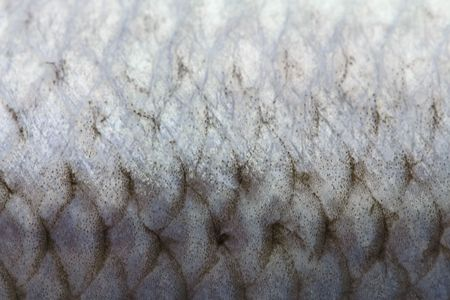 Fish scales close-up
