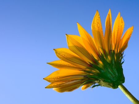 flower against a blue sky