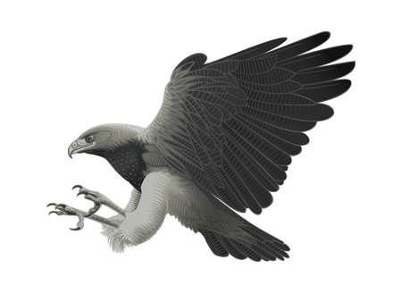 Black chested Eagle buzzard attacking!  Illustration