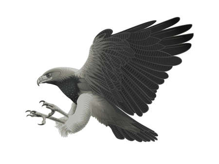 of prey: Black chested Eagle buzzard attacking!  Illustration