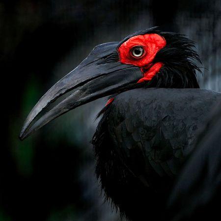 raven Stock Photo - 6964321