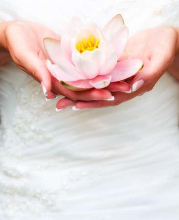 terra arrendada: Lírio de água nas mãos da mulher Imagens