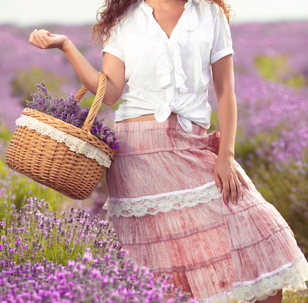 lavender coloured: Beautiful young woman harvesting lavender on field