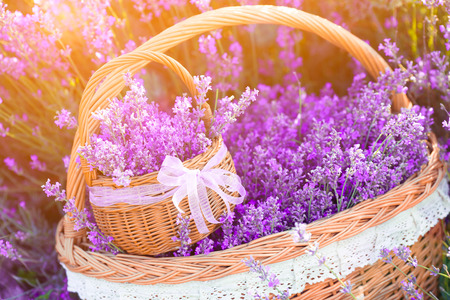 lavender coloured: Lavender flowers in basketry