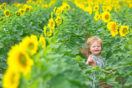 Little boy playing on the sunflower field photo