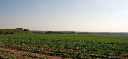 agricultural area: Plowed field in an agricultural area