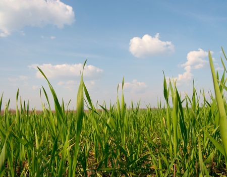 Fresh agricultural field from very low angle photo