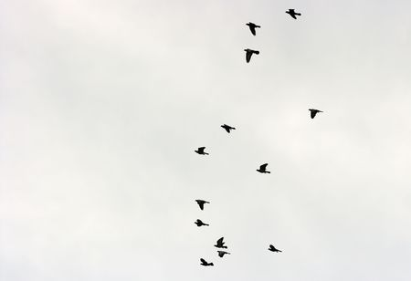 hugh: Many birds flying up in the sky