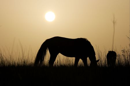Silhouette of a horse in the sunset Stock Photo
