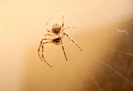 its: Cross spider in its web