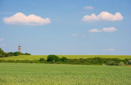 agricultura: Green agricultura field with bright blue sky