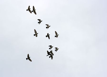 hugh: Many birds flying in the sky in a group Stock Photo